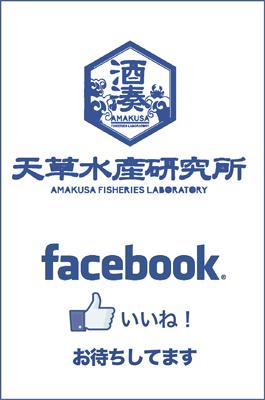 天草水産研究所のfacebookはこちら